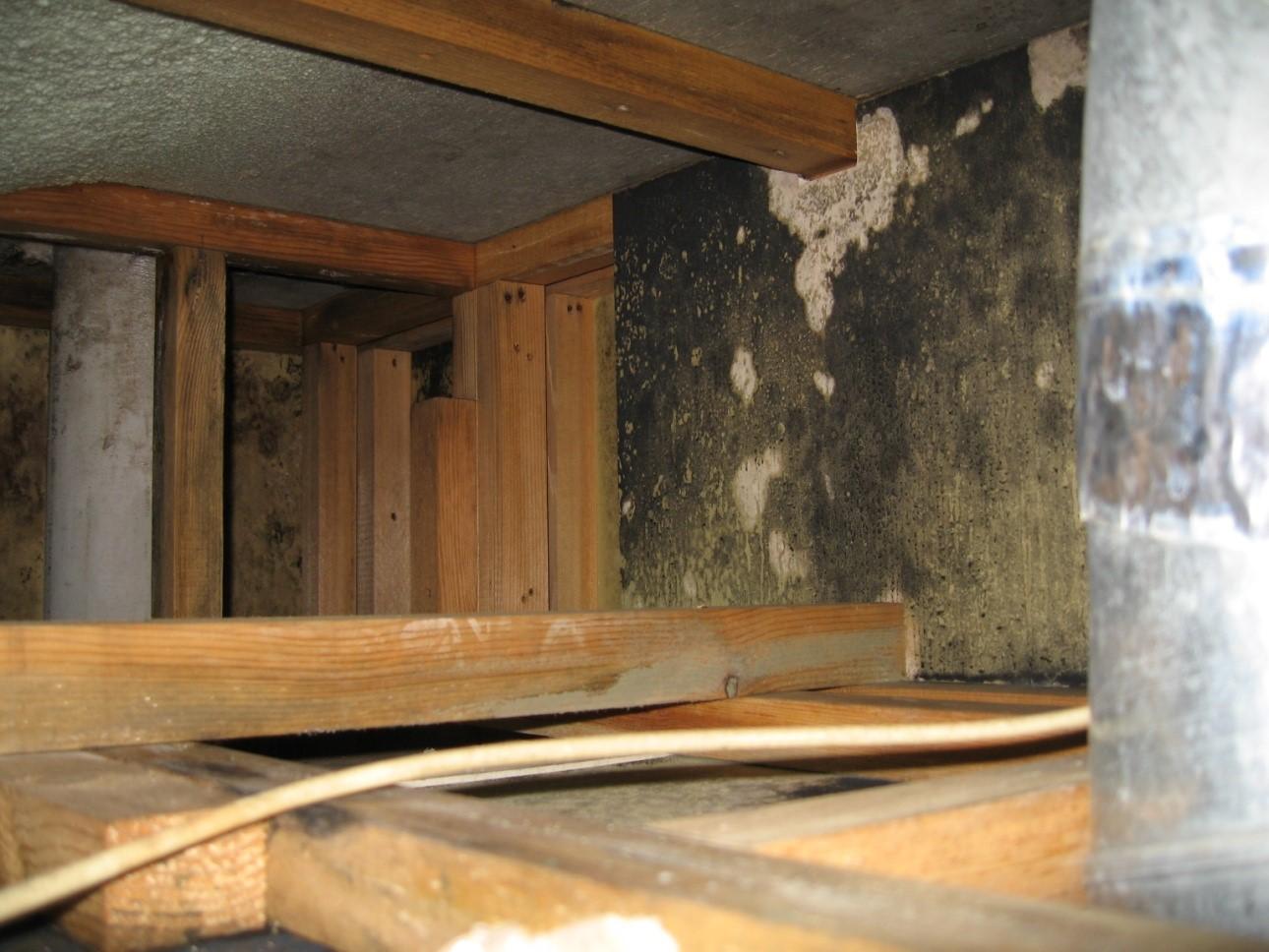 建物内部に発生したカビを除去した様子