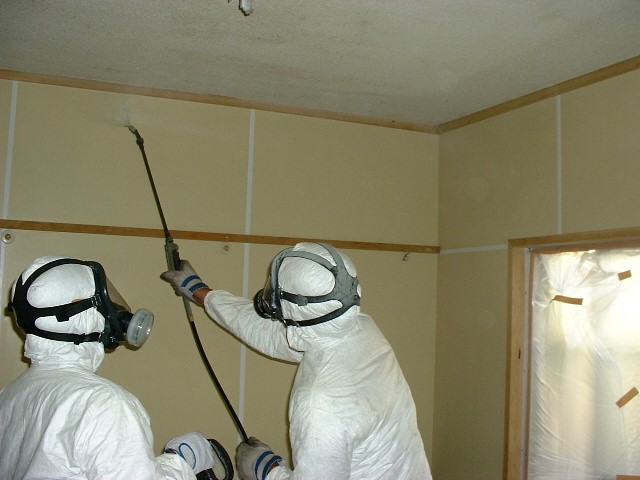 和室の壁にできたカビは専門知識で除去
