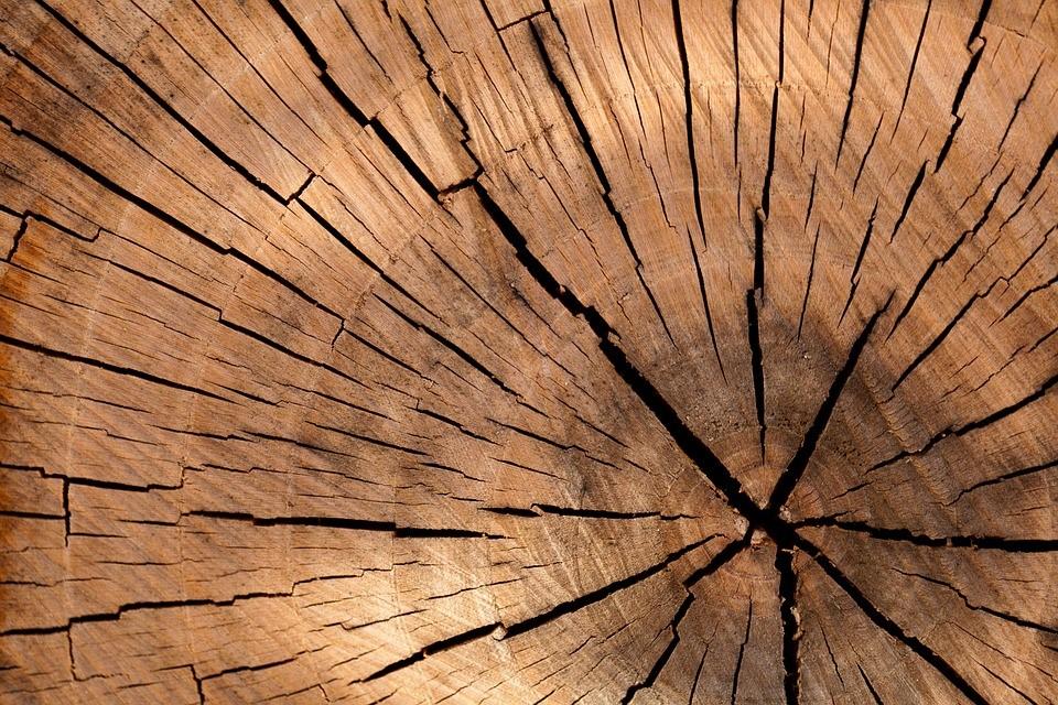 木材にカビが生えやすい理由とは