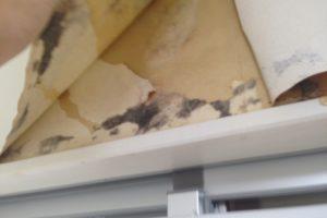 張り替えだけではダメ!壁紙に発生したカビを解決する方法