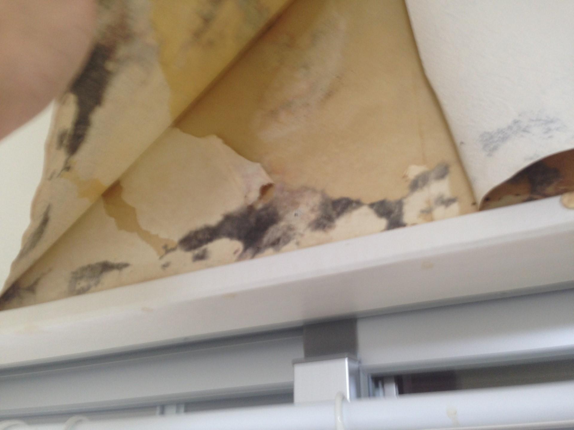 カビ隠しで上から塗装した場合の悲劇