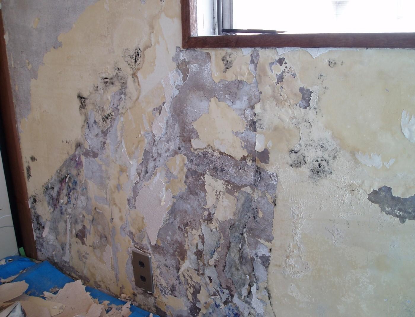 浮き上がった壁紙の裏側はカビや害虫の巣
