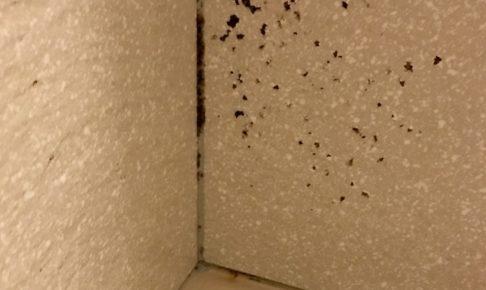 壁カビを発見した際の行動はコレ!除去と予防の為の掃除方法公開